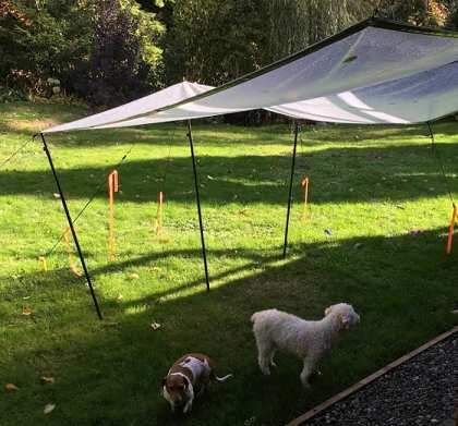 Tarps make great shade for your pets